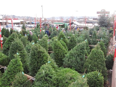 christmas tree lot christmas tree lot pinterest