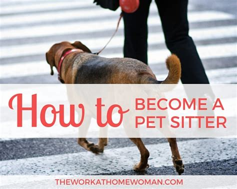 how to become a house sitter how to become a professional pet sitter