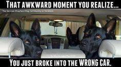 Pet Insurance Meme - 1000 images about car dealer memes and signs on pinterest