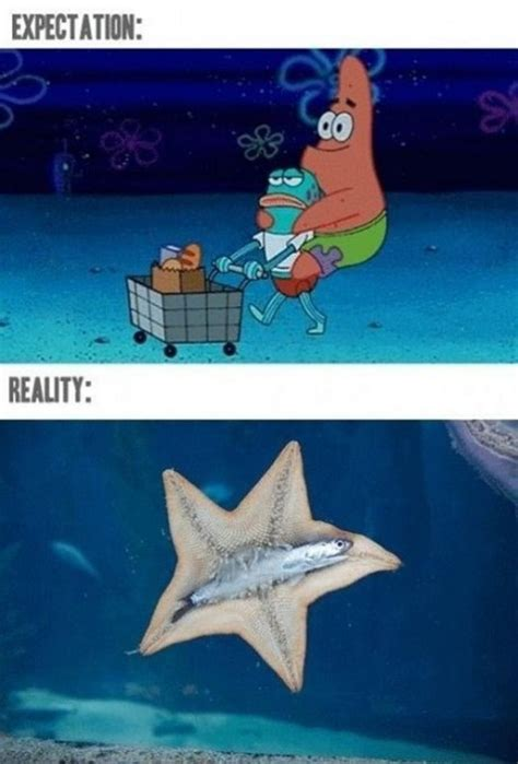 Starfish Meme - expectations vs reality 01