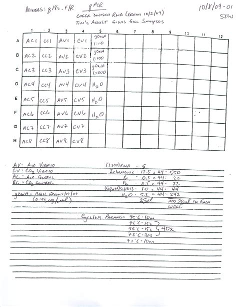 qpcr template 28 images qpcr data analysis excel