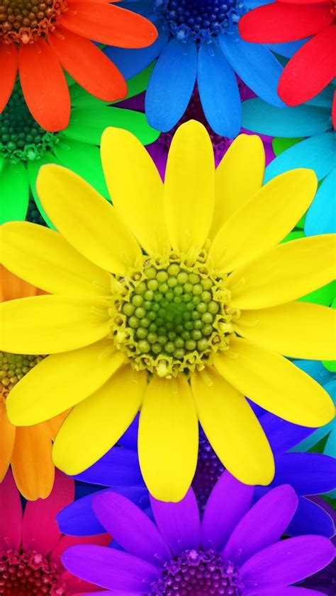 Colorful Daisy Flowers Spring Red Yellow Blue Purple