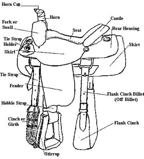 17 best images of saddle worksheets printable part