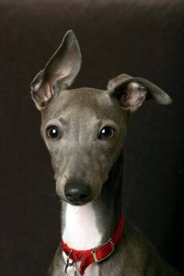 shih tzu keeps sneezing animal fair wendy pet lifestyle expert animal rescue advocate
