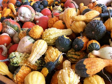 It S Decorative Gourd Season by It S Decorative Gourd Email Disclaimer Season Dan Spira