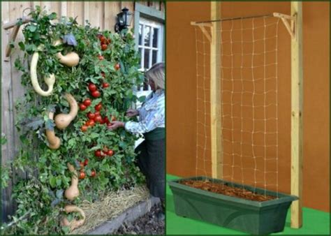 Tomato Planters Ideas by Container Tomato Gardening