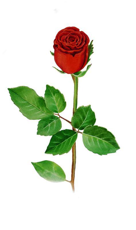single roses a single by irina sztukowski