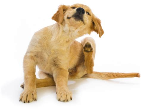 dogs itchy skin news from willows veterinary centre referral service