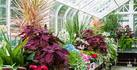Garten Pflanzen Winter by Wintergartenpflanzen Pflanzen F 252 R Den Wintergarten