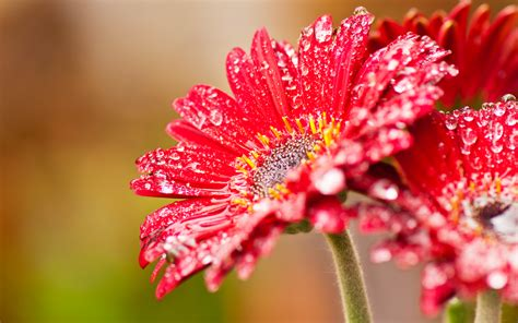 Bild rote blume wallpapers and stock photos