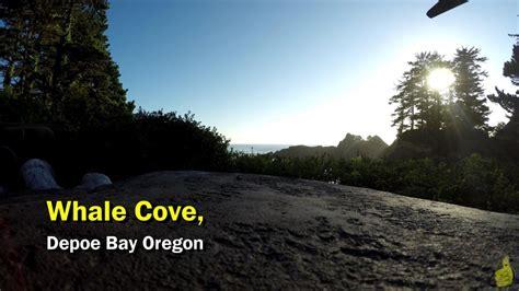 gamebreak whale watching in whale cove oregon