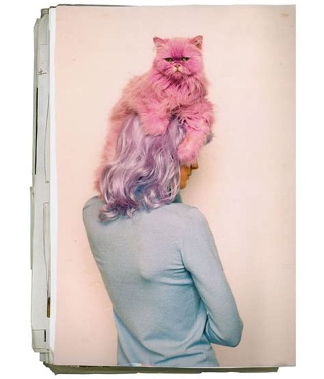 Mewow Pink Oxford cat hair pastel and pink cat on