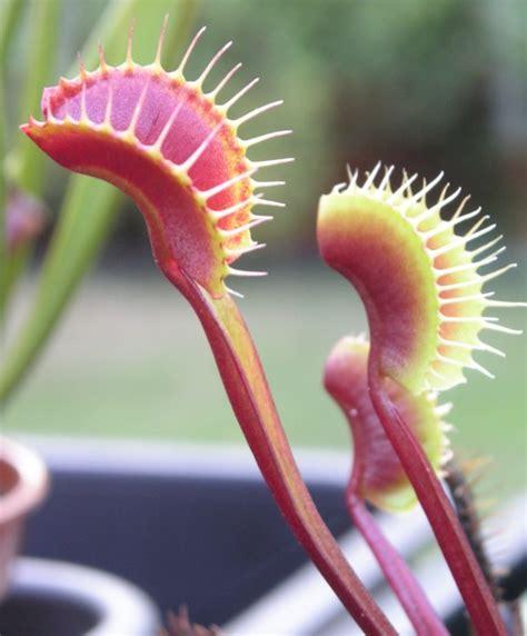 unusual houseplants unusual plants