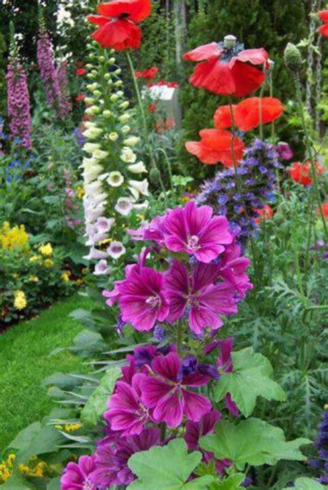Poppy Flower Garden Hollyhocks Poppies Foxglove In My Secret Garden