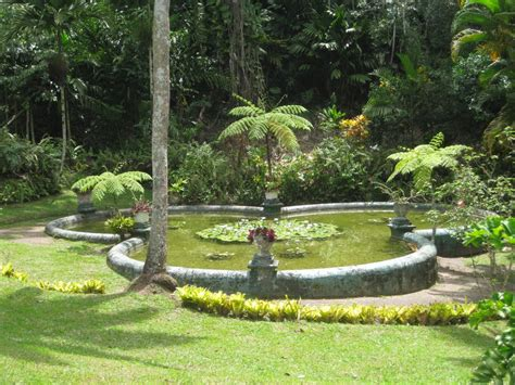 Botanical Gardens In Jamaica Panoramio Photo Of Pond In The Botanical Gardens At
