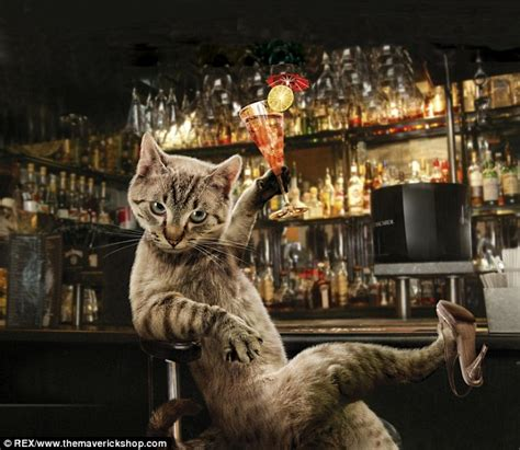 meet the real pusses cats given foxy makeovers