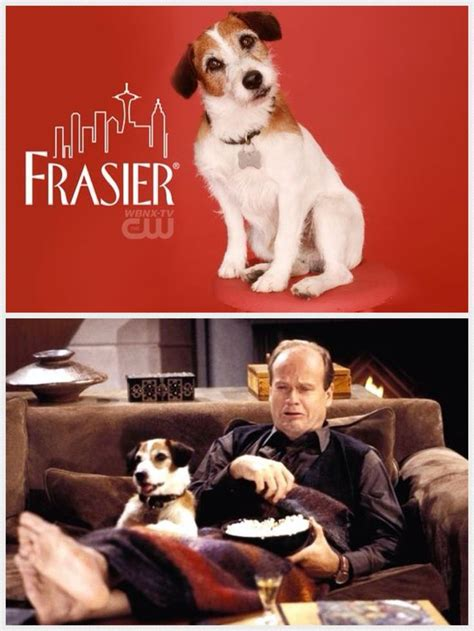 dogs name on frasier 52 best images about eddie from frasier aka quot moose enzo quot on mahoney