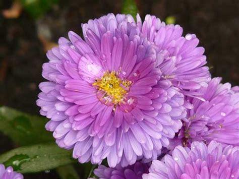 menjelaskan pengertian tanaman hias jenis contoh
