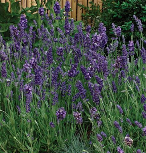 flowers that attract bees to your vegetable garden