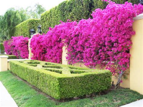 gambar bunga unik  indah koleksi gambar hd