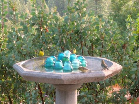 easy steps to a clean birdbath sierra foothill garden