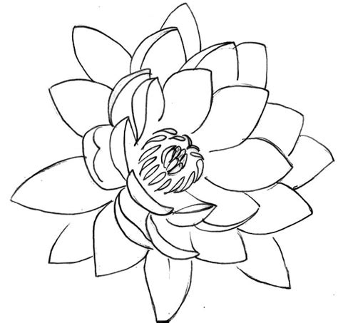 lotus flower drawing images drawing lotus flower coloring pages batch coloring