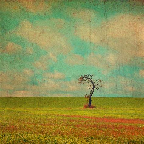 Aqua Sky lonesome tree in lime and orange field and aqua sky