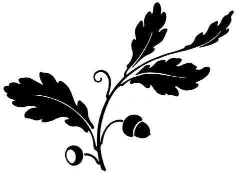 Antique Clip Art Oak Leaf Acorns Silhouette The Black White Oak Leaf