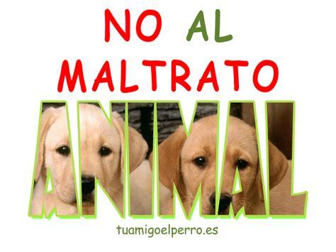 no maltrato animal 25m manifestaciones en toda espa 241 a contra del maltrato
