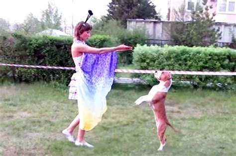 dancer pit with a pitbull