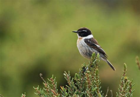 observar las aves bird birding canarias observar aves en las islas canarias