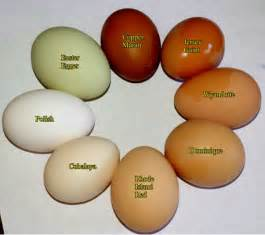 egg color chart black copper maran egg color chart www imgkid the