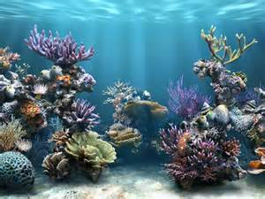 Colorful Coral Reef Wallpaper Colorful Coral Reef Fish hd