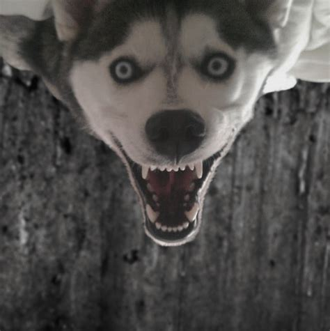 creepy dogs creepy pictures this creepy photoshopbattles creepy pictures