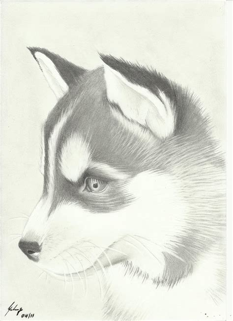 husky puppy drawing husky drawing amazing wallpapers resimkoy drawings drawings