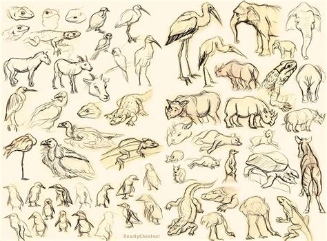 sketchbook of a zoo zoo sketches by deadlychestnut on deviantart