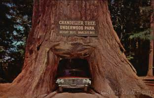 Chandelier Tree California Chandelier Tree Underwood Park Redwood Highway Ca