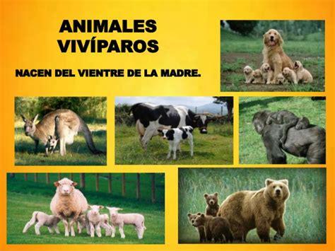 imagenes animales viviparos nacimiento y crecimiento de humanos y animales