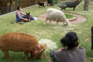 animals find temporary shelter in melbourne backyard as