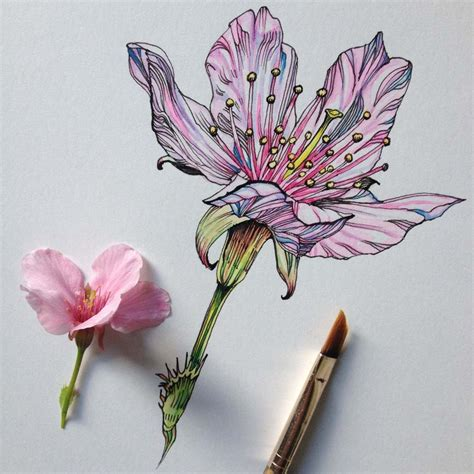 Drawing Flowers by 27 Tips For Drawing Flowers Plants Nature Digital Arts