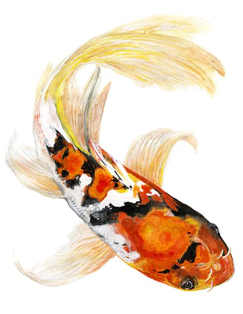 koi fish watercolor paintings butterfly koi fish watercolor print signed by artist stephanie