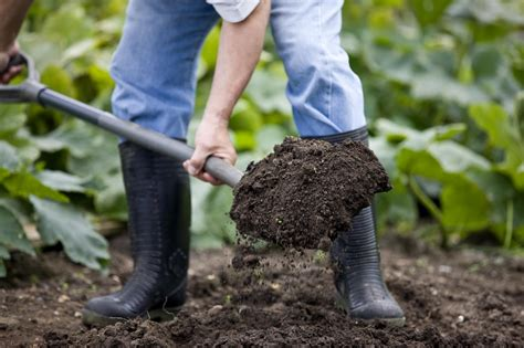 Dig Dig easy composting the dig and drop method