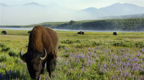 yellowstone 183 national parks conservation association montana governor offers historic gift of more than 300 000