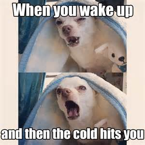 Memes About Winter - 17 dog pictures that perfectly sum up your hatred of
