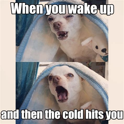 Winter Meme - 17 dog pictures that perfectly sum up your hatred of