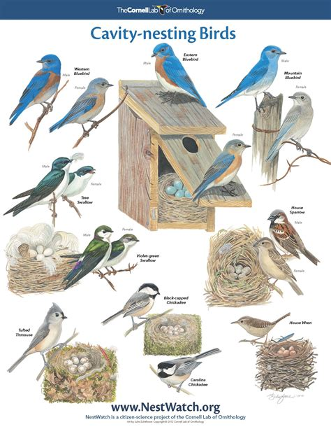 pictures of different breeds pictures of different types of birds and their names