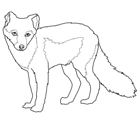 Arctic Fox Coloring Pages arctic fox summer coat coloring page supercoloring
