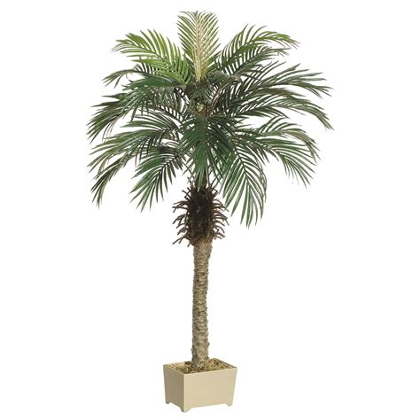Decorative Palm Trees by 4 5 Foot Palm Tree In Decorative Pot Lpp505