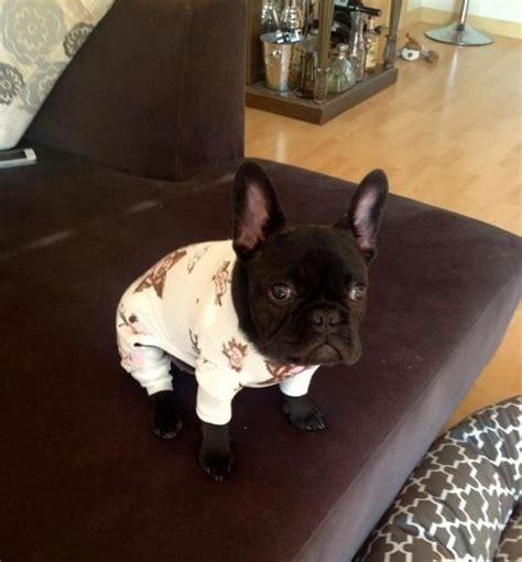 puppies in pajamas puppies in pajamas neatorama