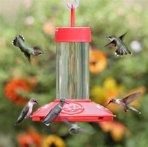 best 28 where to put hummingbird feeders amazon com